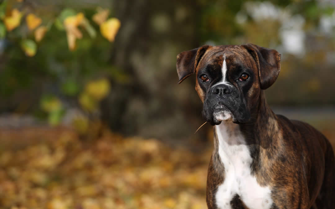 Is Alabama Rot a threat?