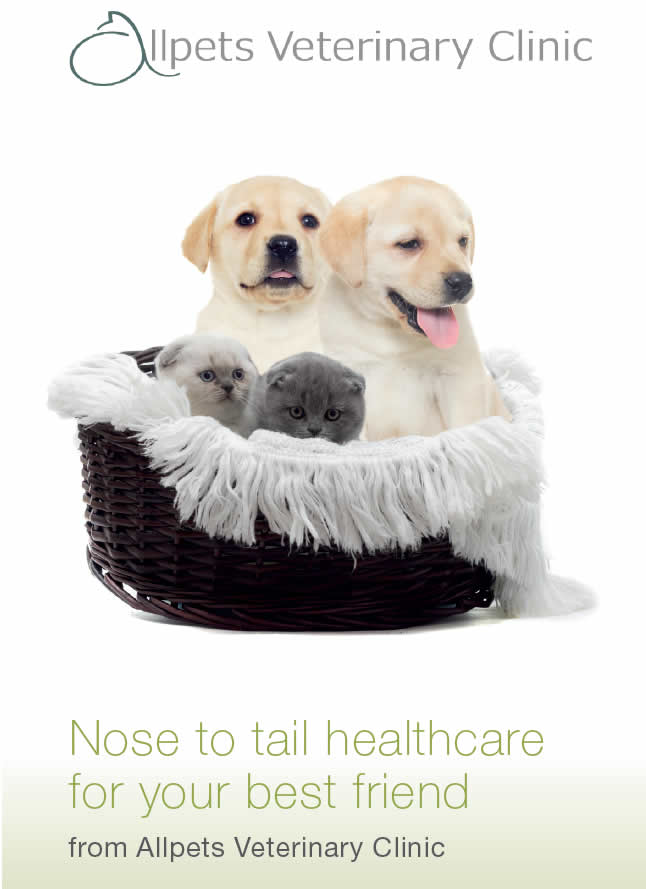 pet health plan allpets vets