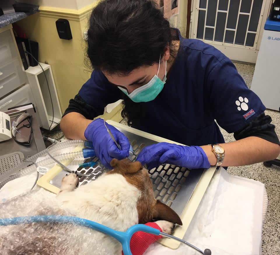 Our vet Lara hard at work