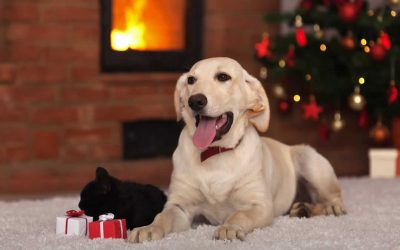 Merry Christmas to all our loyal clients and their pets