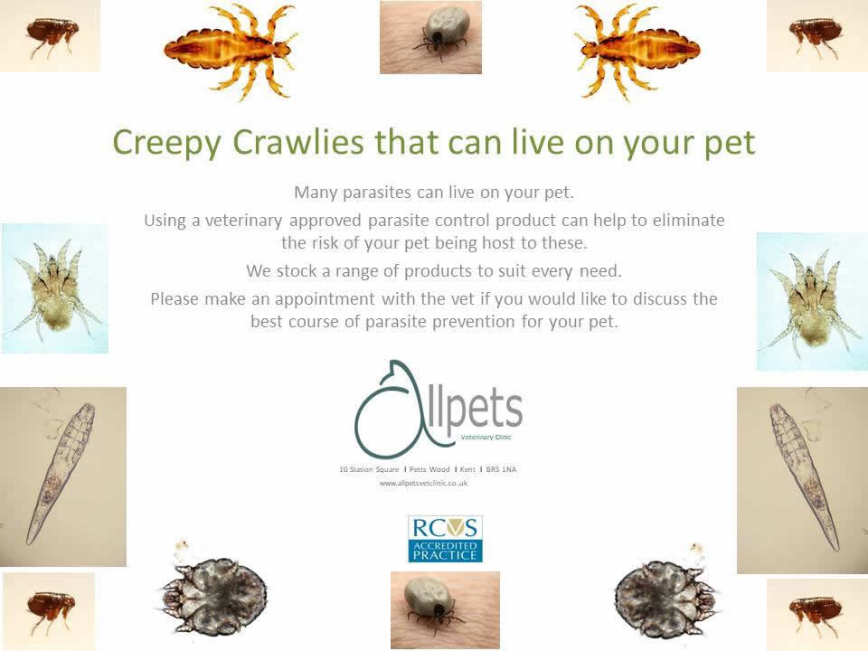 creepy crawlies at Allpets vets