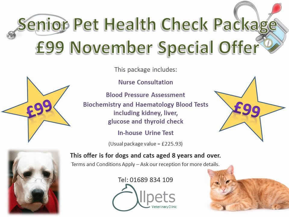 Senior Pet health Offer at Allpets November 2018