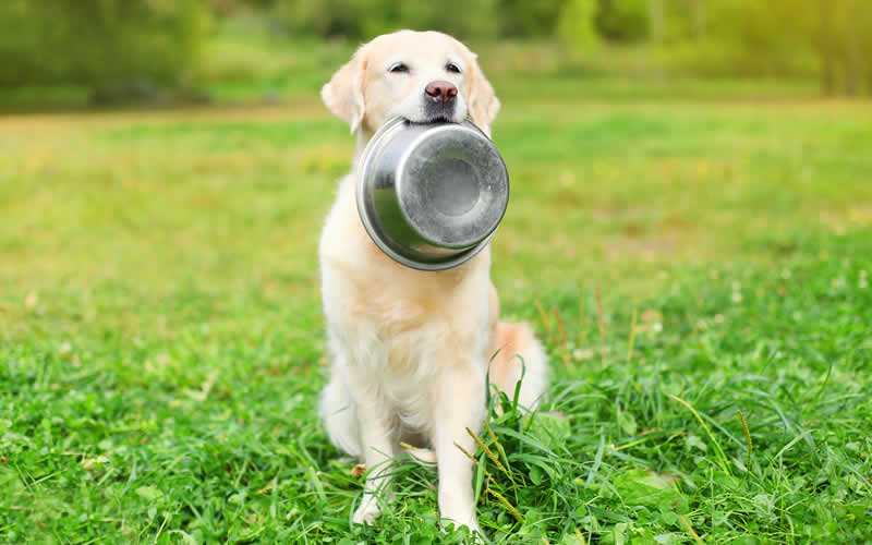 Hills pet food recall - dog with foodbowl in his mouth