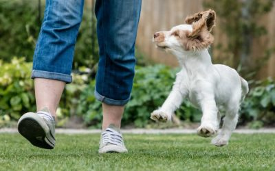 Puppy Socialisation Classes