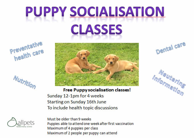 puppy classes at Allpest vets